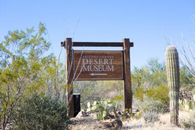 Desert-Museum-Wedding-2