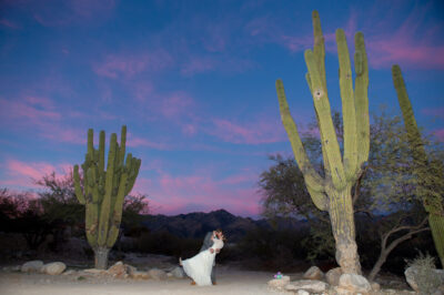 Corona-Ranch-Wedding-65